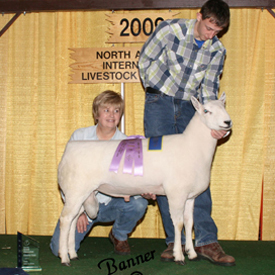 Best Headed Ram - 2009 NAILE Open Show