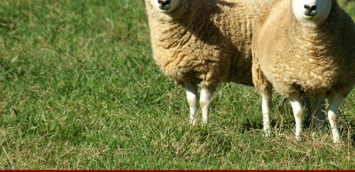 American Cheviot Sheep Society - Membership